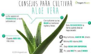 cultivar-aloe-vera-668x400x80xX